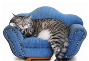 Stii cum sa iti ingrijesti pisica?