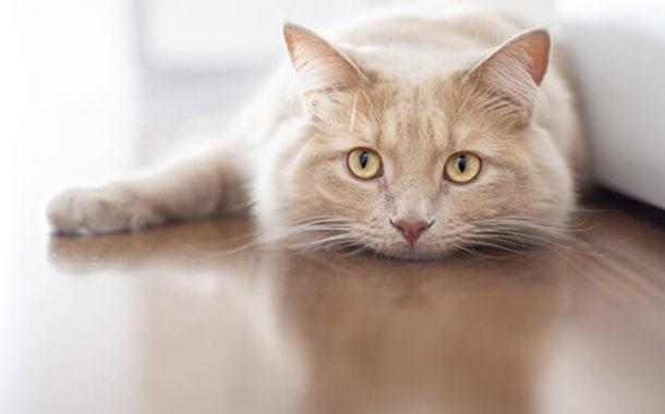 Ce tip de mancare trebuie sa ii oferi pisicii tale?